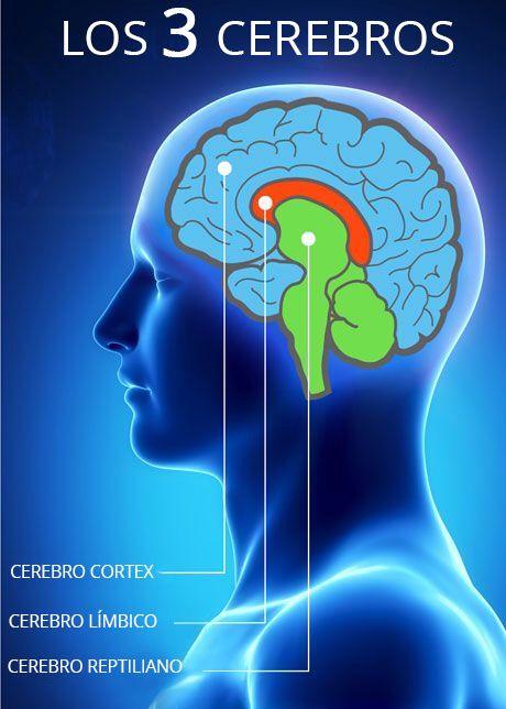 cerebro triuno reptiliano